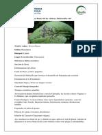Guía fotográfica de manejo de plagas/ entomología
