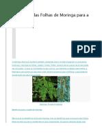 Benefícios Das Folhas de Moringa Para a Saúde