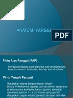 Anatomi Panggul Ppt-1