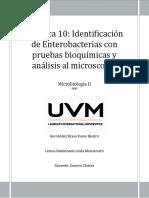 Identificación de enterobacterias