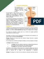 APARATO-DIGESTIVO-luis.docx
