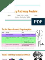 Sensory Pathway Review