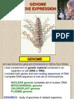 03 Gene Expression