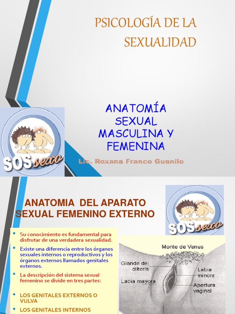 Anatomía Sexual Humanacls