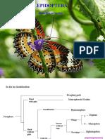 32a-Lepidoptera13