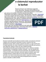 Bolile Si Igiena Sistemului Reproducator Masculin - Sumalan Vlad