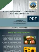 ANATOMIA VEGETAL (1).pptx