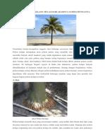 Manfaat Pohon Kelapa Mulai Dari Akarnya Sampai Bunganya