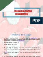 Reconociemiento de Leucocitos