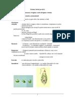 Proiectdidactic Euglena