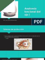 Anatomía Funcional Del Ojo I