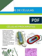Clase N°3 - Tipos de Celulas