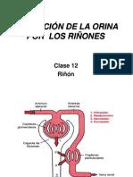 Clase 12. Procesamiento Tubular Del Filtrado Glomedular