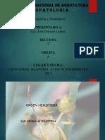 homoptera y hemiptera.pptx