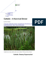 Cattails – A Survival Dinner | Eat The Weeds and other things, too