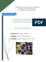DESARROLLO EMBRIONARIO EN ERIZO DE MAR (Tetrapygus niger)
