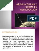 CNATURALES DIVISIÓN CELULAR (MEIOSIS).pdf