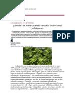 Perseguição política ao uso da Cannabis
