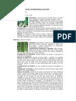 Clase 7 Caracteristicas de Cultivos