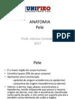 Anatomia Pele