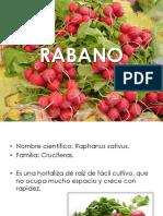 rabano-110701114843-phpapp02 (1).pdf