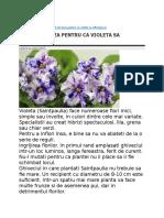 Violeta de Parma (Africana)