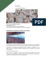Vacunación en Pollos de Engorde