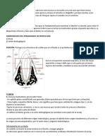 periodonciooo protecioon.docx