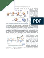 Activación de Linfocitos B