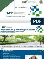 P1_Arquitectura Arbórea Característica fundamental  en la selección de árboles en Entornos Urbanos.pptx