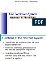 Introduction Nervous System
