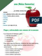 MARCO TEORICO La manzana (Malus Domestica).pptx
