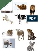 草肉杂食动物