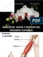 5. Musculos Miembro Superior