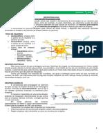 Neurofisiologia MEDRESUMO