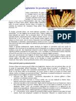 Introducerea Baghetelor in Productia Zilnica