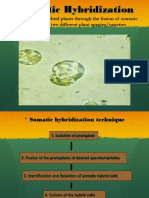 1.Somatic Hybridisation