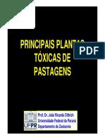 Plantas Toxicas de Pastagens