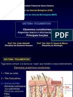 Anatomia Sistema Tegumentar 2017.2.pdf