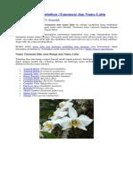 338881080-Tumbuhan-Dan-Bunga-Dalam-Bahasa-Latin.docx