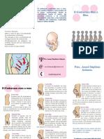 143235385-triptico-embarazo.pdf