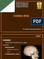 Cabeza Osea.ppt