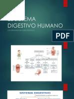 2do el sistema digestivo humano.pptx