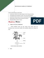 5.Struktur Dan Jaringan Tumbuhan