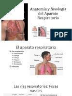 Anatomía y Fisiología Del Aparato Respiratorio Exposicion (1)