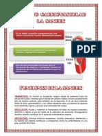 Informe - Aparato Cardiovascular