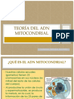 Teoría del ADN Mitocondrial.pptx