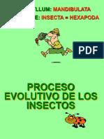 2 MORFOLOGÍA DE INSECTOS.ppt