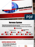 Lecture _4_Nervous System.pptx