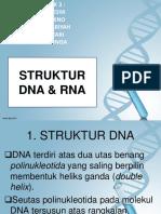 RNA DNA.pptx